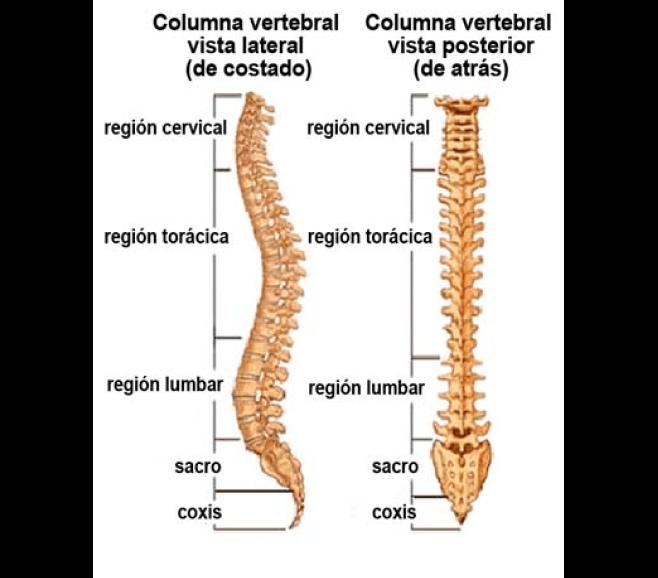 columna med